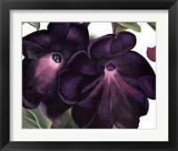 Framed Black and Purple Petunias