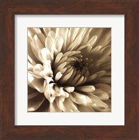Framed Sepia Bloom I