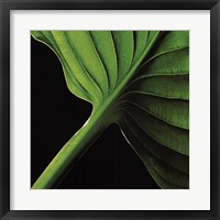 Palm I Framed Print