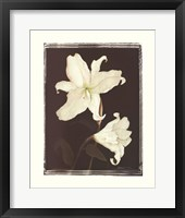 Framed White Lilies in Chocolate