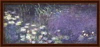 Framed Water Lilies: Morning