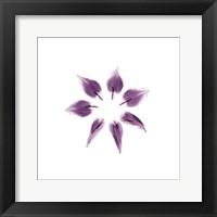 Framed Tulip Petals