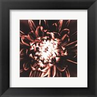 Framed Dahlia