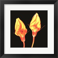 Framed Electric Flowers No. 2