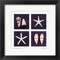 Framed Seashells Study