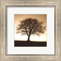 Framed Winter Tree No. 2