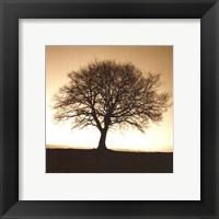 Winter Tree No. 2 Framed Print