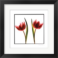 Framed Tulip Impressions II