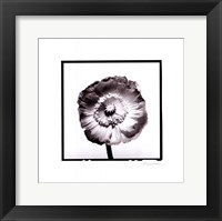Framed Translucent Poppy I