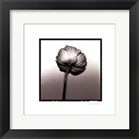 Framed Translucent Poppy II