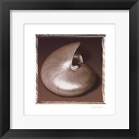 Shell-Egance II Framed Print