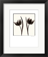Framed Tulip Shades II