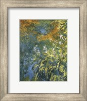 Framed Yellow Iris