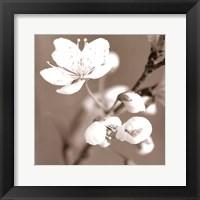 Framed Blossom III - sepia