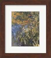 Framed Iris, 1914-1917