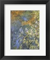 Framed Yellow Iris