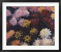 Framed Chrysanthemum, 1897