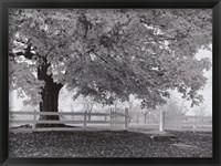 Framed Autumn Morning