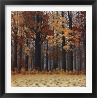 Framed Autumn Wood