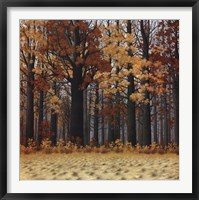 Framed Autumn Wood