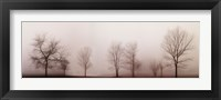 Framed Misty Meadow