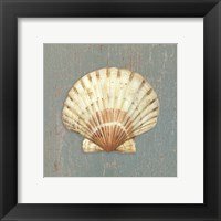 Framed Scallop Shell