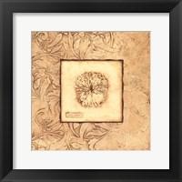 Rose Coral Framed Print