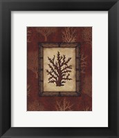 Red Coral II Framed Print