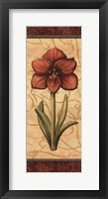 Framed Red Passion Amaryllis- Mini