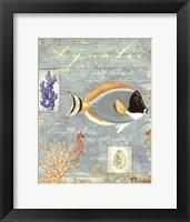 Aquatic Framed Print