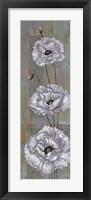 Framed Florentine Poppies