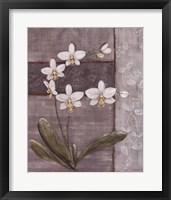 Framed Orchid Shimmer II - mini