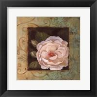 Antique Rose IV Framed Print