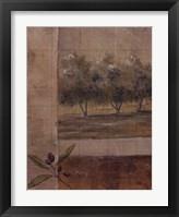 Framed Olive Groves I