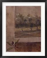 Framed Olive Groves I