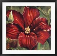 Framed Rosa Odorada