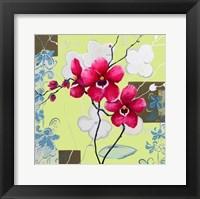 Framed Orchids in Bloom IV