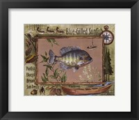 Blue-Gilled Sunfish Framed Print