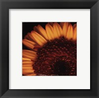 Beautiful Burst Framed Print