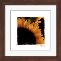 Framed Sunflower Daze