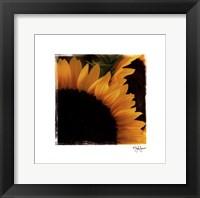 Sunflower Daze Framed Print