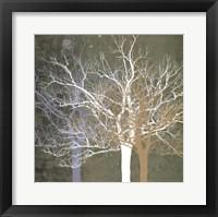 Quiet Forest Framed Print