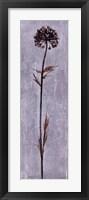 Cool Botanicals I Framed Print