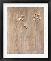 Framed Vanilla Bloom I