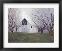 Framed Orchard Blossoms