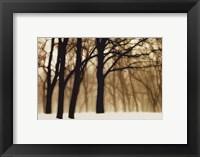 Framed Past Dreams