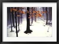 Framed Quiet Woods