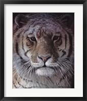 Framed Tiger Portrait