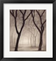 Framed Forest IV