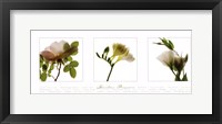 Garden Flowers IV Framed Print